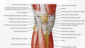 la rotula e i suoi legamenti e i problemi rotulei